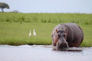 Days 8-9 - Discover Chobe National Park
