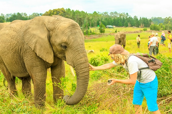 Elephant Encounter