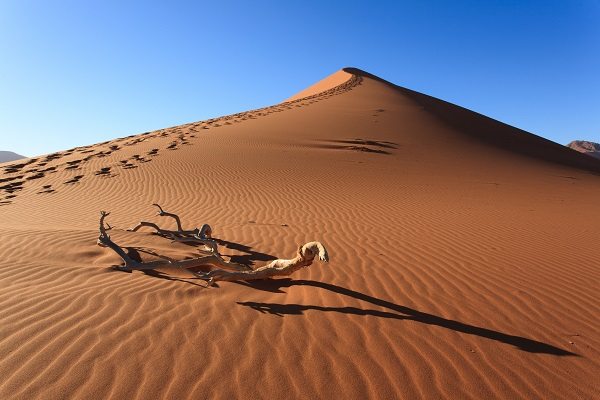 Guided Dune Walk