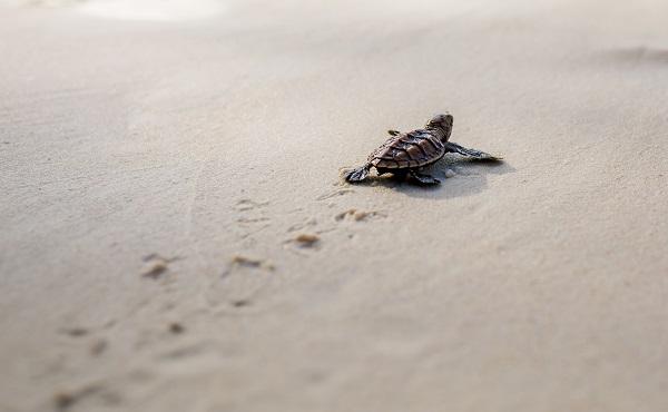 Turtle Nesting Adventure