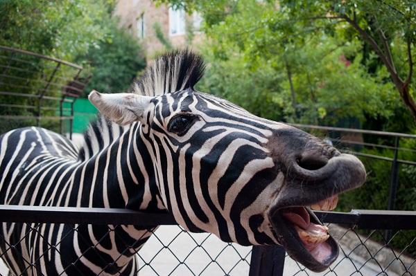Explore the Joburg Zoo
