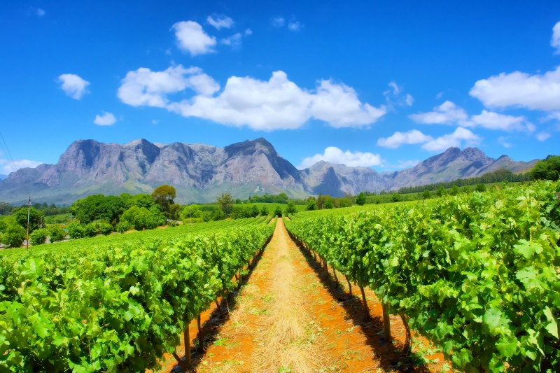 Day 13 - Travel to the Cape Winelands